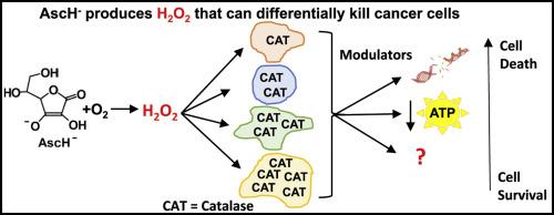 Credit: Redox Biology Doskey et al 2016