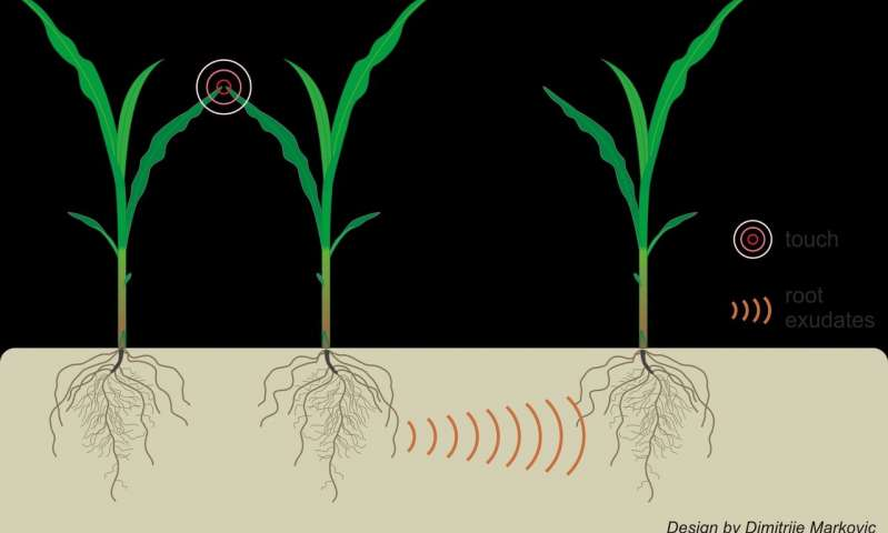 Even the smallest touch above ground may trigger underground chemical communication between plants.