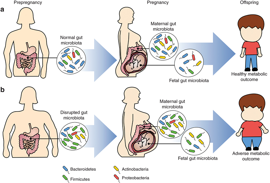Scientists believe that there are many outcomes affected by microbiome composition. Source: Nature