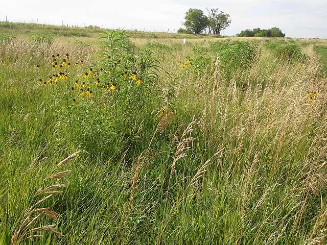 ARS scientists found antibiotic-resistant bacteria occurring naturally in undisturbed Nebraska prairie soils. / Credit: ARS