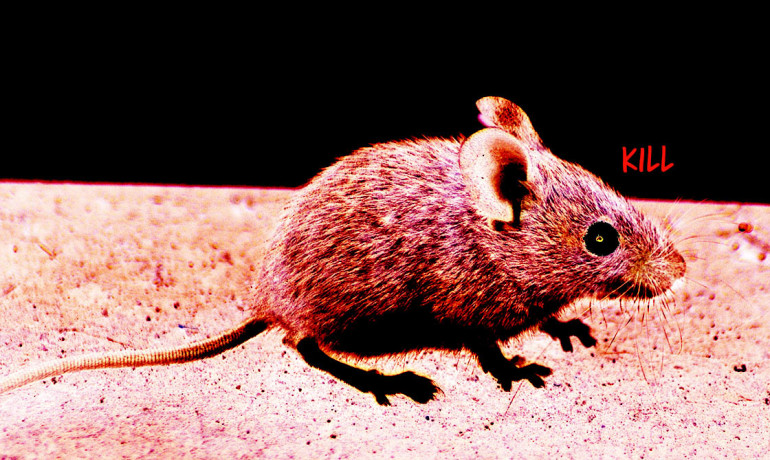 "By ""exciting"" selected groups of brain cells with light from a surgically inserted probe, researchers could start, stop, and restart aggressive outbursts in the study mice."