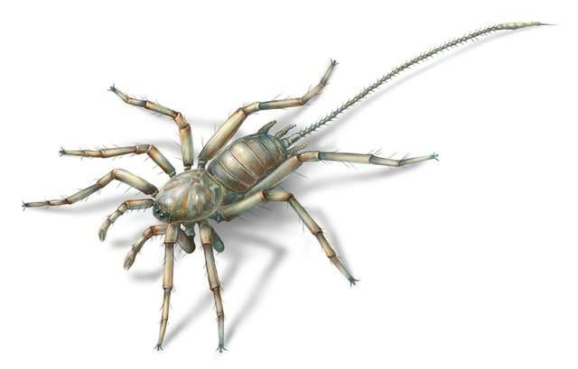 An artist's rendition of a new arachnid species found inside of a hunk of amber from Myanmar. It could be 100 million years old or more.