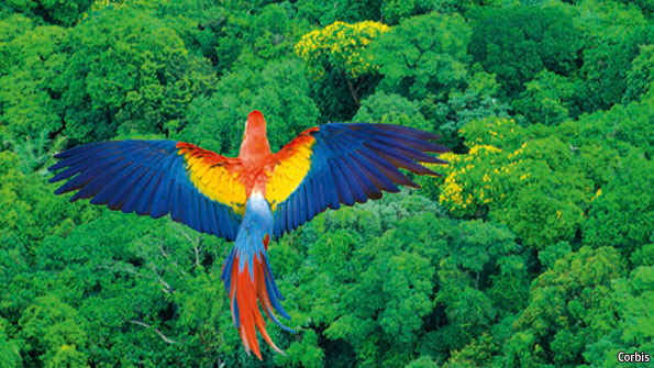 Amazonia supports the most biodiversity anywhere on Earth. Photo: The Economist