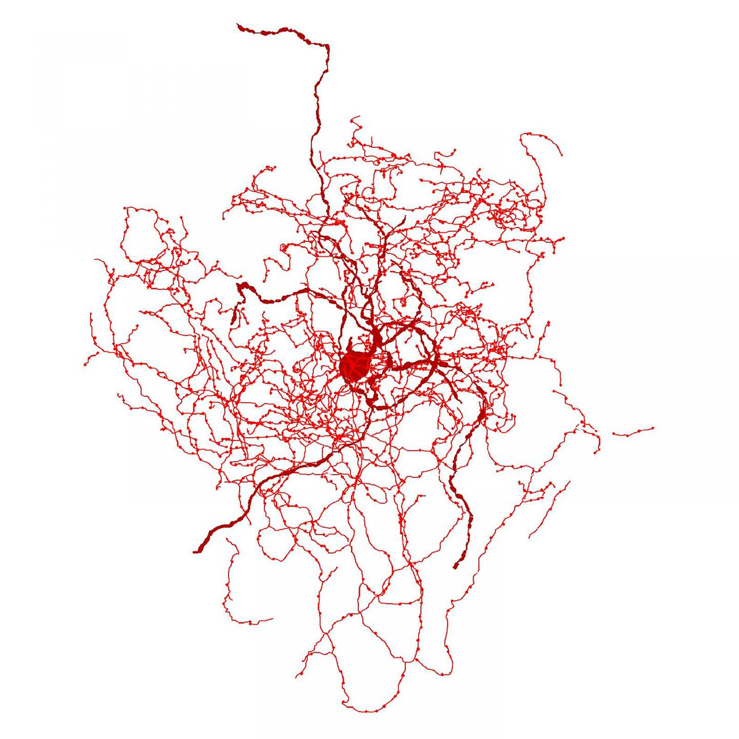 This is a digital reconstruction of a rosehip neuron in the human brain.  / Credit: Tamas Lab, University of Szeged