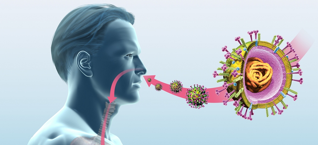 Researchers identified new host defenses against the common cold.