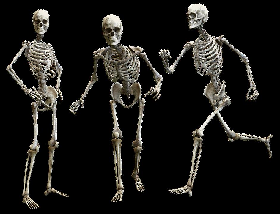 Do we feel the fight or flight instinct in our bones? /  Image credit: Pixabay