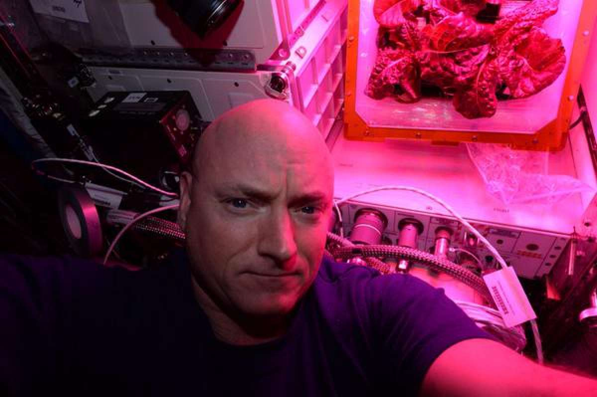 Astronauts will eat salad grown on the ISS 75