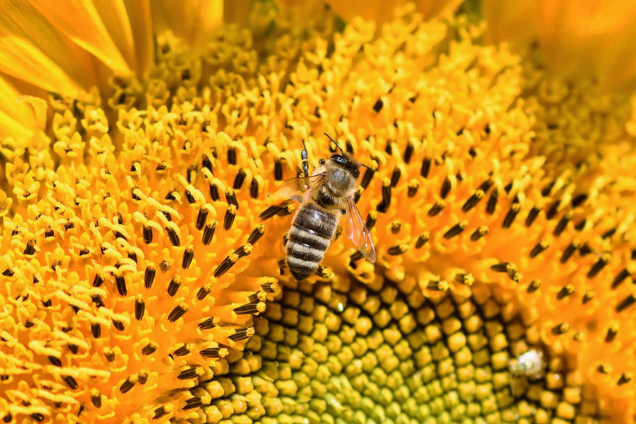 Bees are impacted by pesticides, and future alternatives may not be any better.
