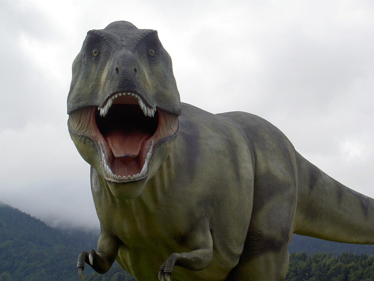 Chances are, you're pretty familiar with the T. Rex. But how much do you really know about them?