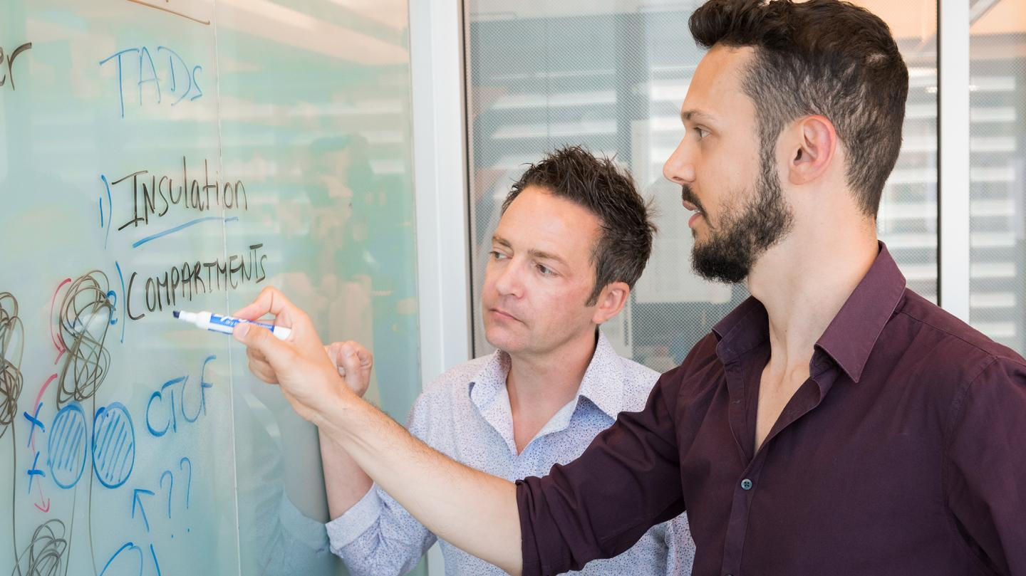 Findings by Benoit Bruneau (left) and Elphège Nora (right) from the Gladstone Institutes reshape our understanding of how DNA is organized in cells. / Credit: Chris Goodfellow, Gladstone Institutes