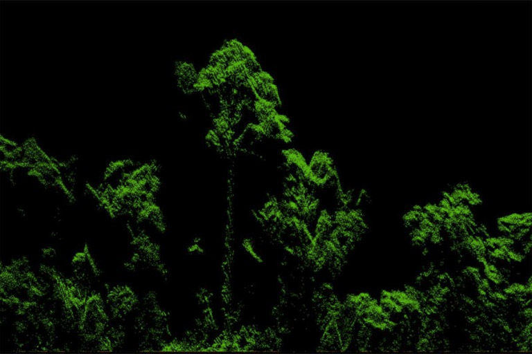 Lidar rendering of the tree. Photo credit: Michele Dalponte