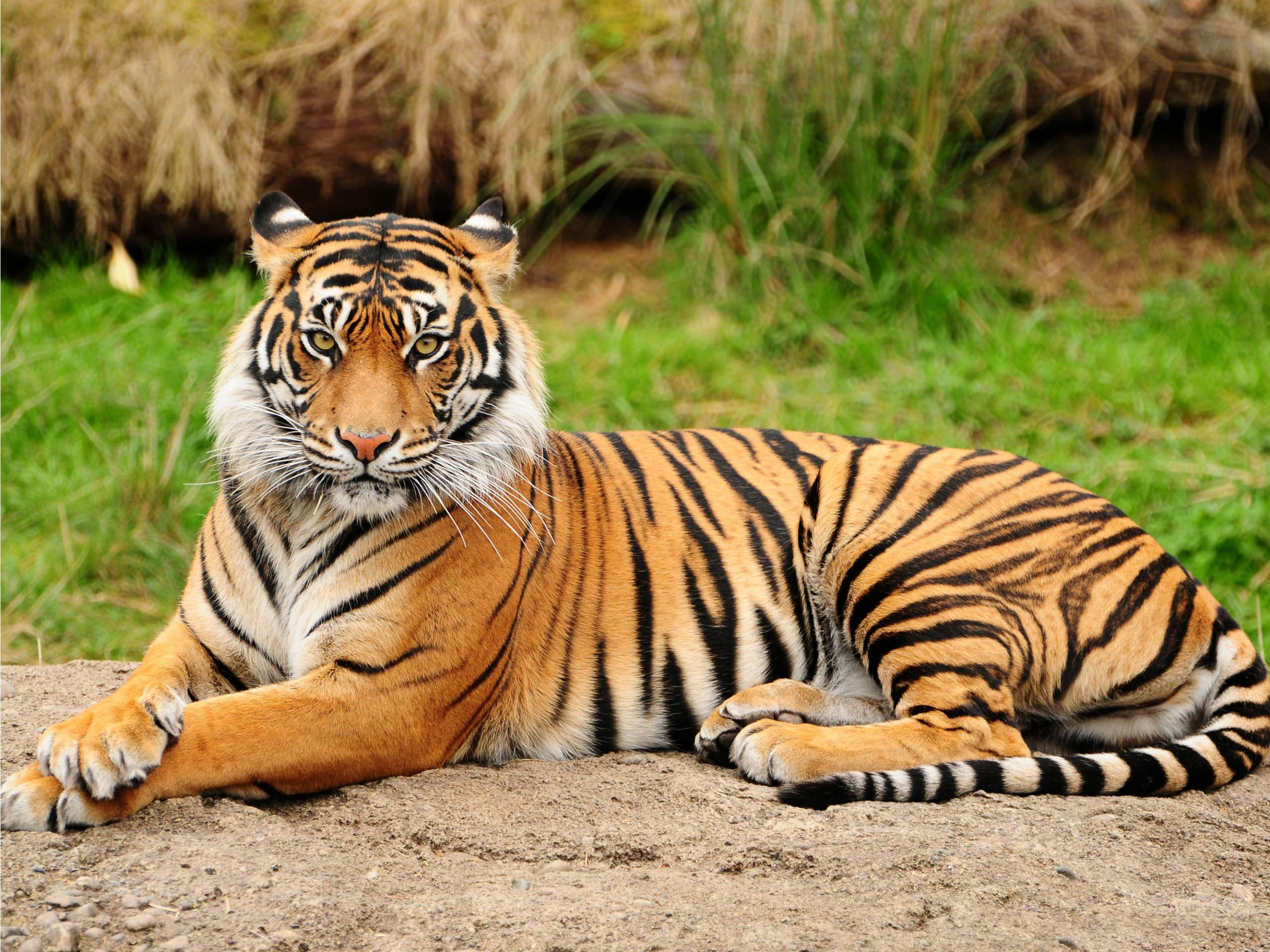 WWF reports increase in tiger population for the first time in decades.
