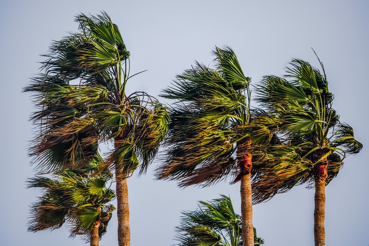 Climate change may be causing palm trees to migrate further Northward in the wake of warming temperatures at higher latitudes.