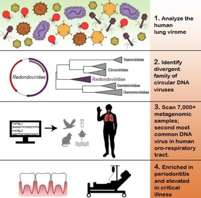 New sequencing techniques are uncovering a world of new viruses. / Credit: Penn Medicine