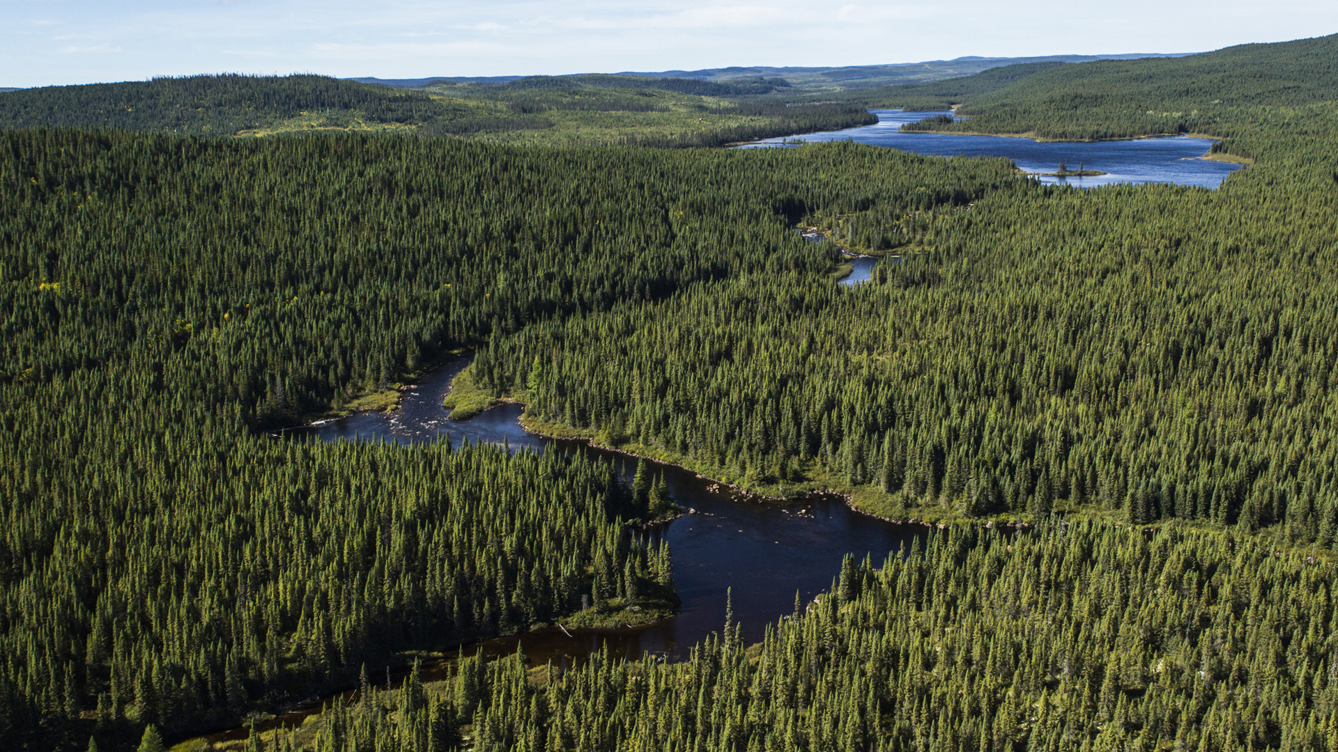 These forests are important carbon sinks. Photo: Boreal Forest Facts