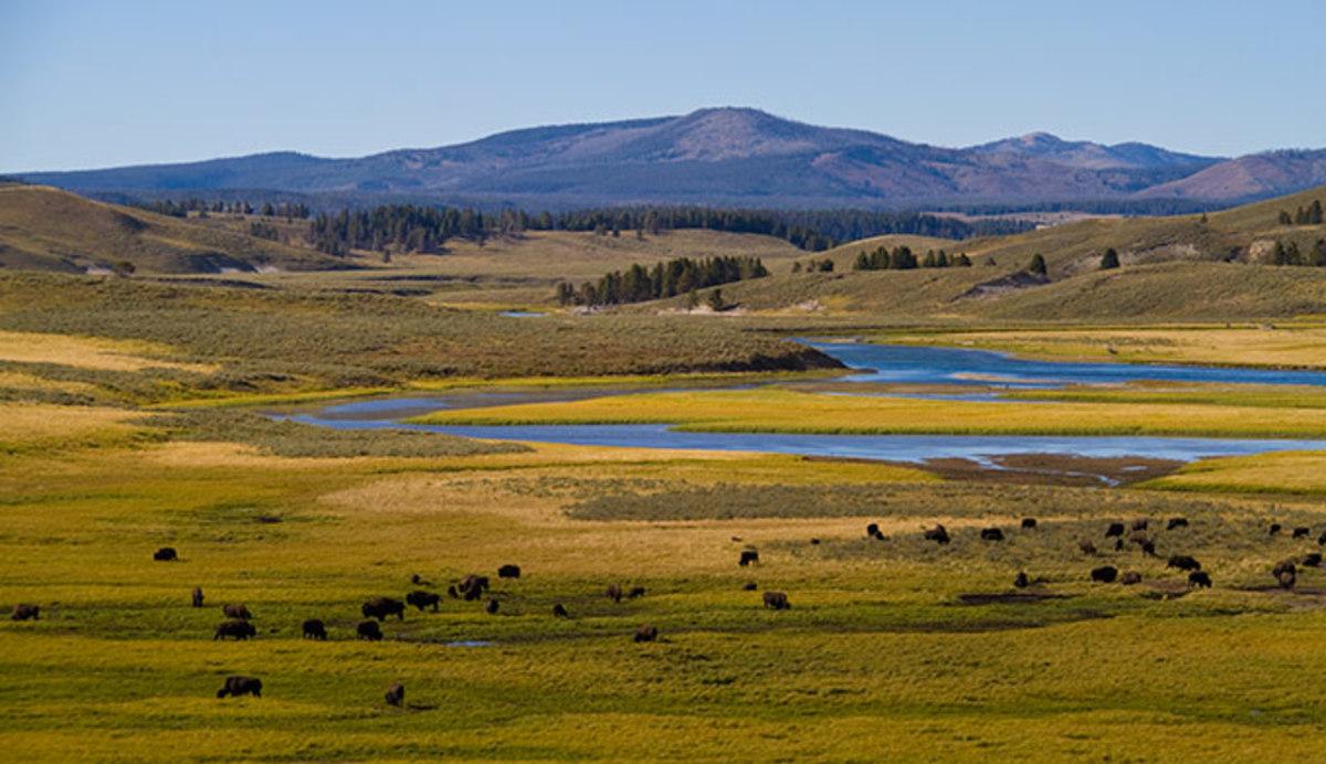 Overlooking Hayden Valley with a herd of bison. Photo: Jeff Vanuga via Yellowstone National Park