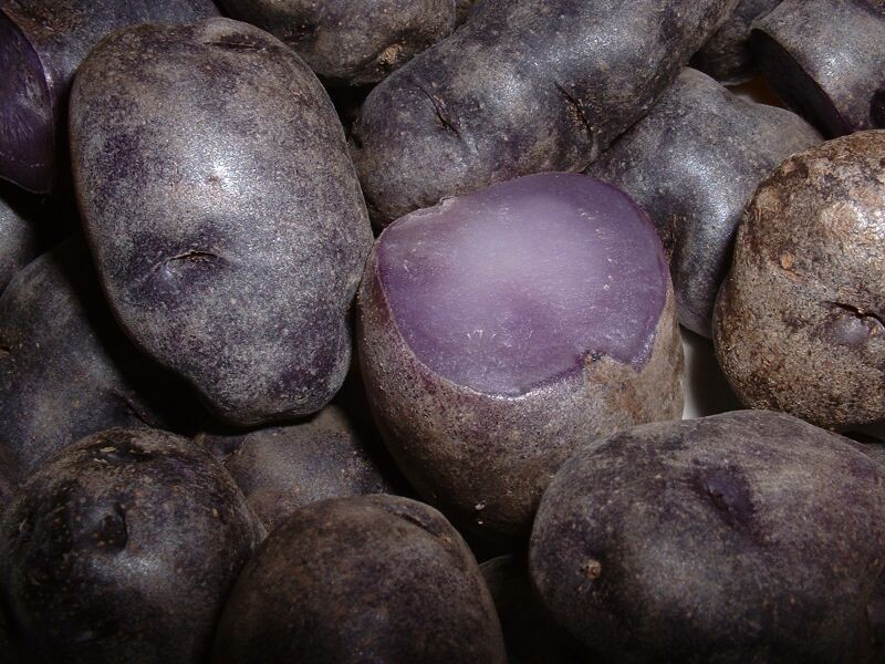 Purple potatoes may have preventive powers.
