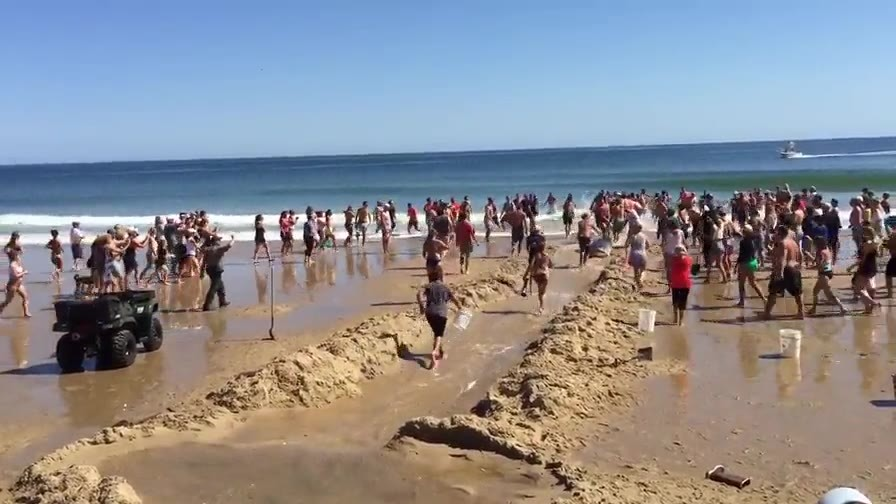 Beachgoers tried desperately to save a shark on Cape Cod