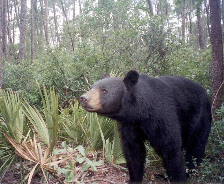 Drones were found to dramatically increase the heart rates of bears